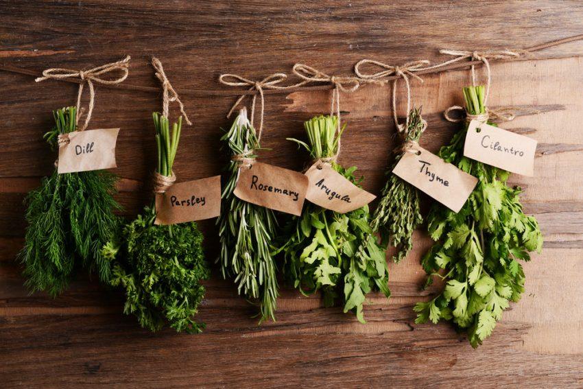 Herbes aromatiques pour manger avec de la viande ou du posison